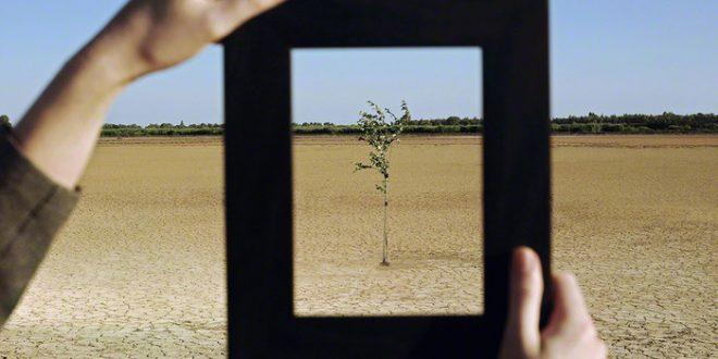 Woman Framing Tree in Desert