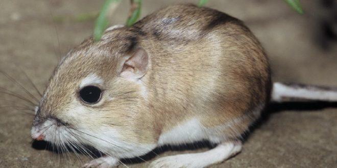 نتیجه تصویری برای تعدادی موش رو دانشمندان داخل يك استخر آب انداختند.